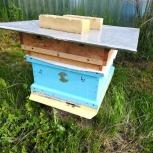 Пчёлы спокойные,трудолюбивые, Екатеринбург
