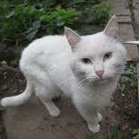 Найден котик, Екатеринбург