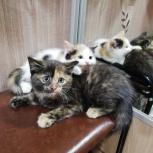 Найдены котята, Екатеринбург