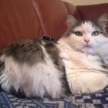 Дусенька кошка, Екатеринбург