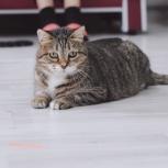 Кошка Люсьен в добрые руки, Екатеринбург