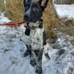 Пропала собака Нижнеисетск, Уктус, Химмаш, Екатеринбург