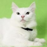 Кошка Скалли. Строгая блондинка, 5 лет, Екатеринбург