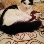 Котенок-девочка в добрые руки, Екатеринбург