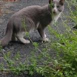Замечен серый кот (кошка), Екатеринбург