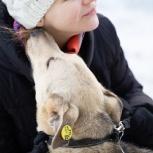 Обаятельный пес Рэм ищет дом, Екатеринбург