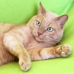 Мурзик, кот 10 лет, оставшийся без хозяйки, Екатеринбург