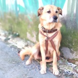 Взрослая собачка средних размеров, Екатеринбург