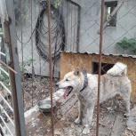 Найден пёс!, Екатеринбург
