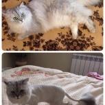 Стрижка кошек и котов!, Екатеринбург