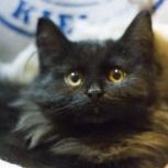 Котёнок в добрые руки, Екатеринбург