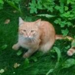 Замечен рыжий кот (Юго-Западный, Екатеринбург), Екатеринбург
