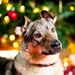 Идеальная собака ищет дом и хозяина!, Екатеринбург