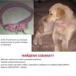 Б.Седельниково найдена собака, Екатеринбург