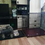 Клетки для собак и кошек сдам в аренду, Екатеринбург