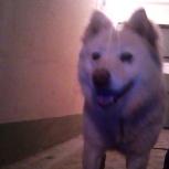 нашлась собака, Екатеринбург