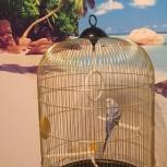 Волнистый попугай, Екатеринбург
