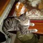 Найден тигровый кот, Екатеринбург