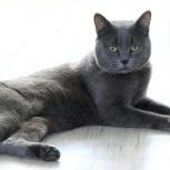 Шикарный молодой котик Принц, 1,5 года, Екатеринбург