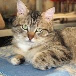 Ален Делон котик ищет семью, Екатеринбург