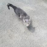 Найден кот или кошка ЖБИ Новгородцевой 3, Екатеринбург