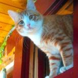 Пропал рыжий кот (виз), Екатеринбург