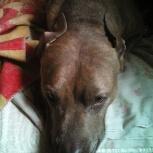 Пропала собака!!!, Екатеринбург
