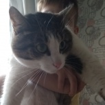 Найдена котик, Екатеринбург