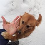 В Малом Истоке ( оз Мостовка) найдена рыжая собачка, Екатеринбург