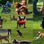 Помощь в дрессировке собак, Екатеринбург