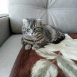 Отдам кота в добрые руки, Екатеринбург