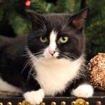 Пикколо, маленькая ч/б кошка 4г., ищет дом, Екатеринбург