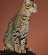Е1 коты