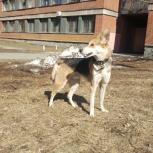 Найден пёс в р-не Пединститута, Екатеринбург
