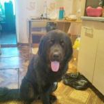 Пропала собака в районе вертолета, Екатеринбург