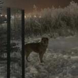 Замечена крупная рыжая собака, Екатеринбург