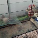 Новый аквариум (акватеррариум, черепашник) 240 л, Екатеринбург