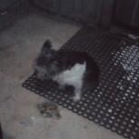 Найдена собака!!! Черная!!! С ошейником!!! На Соболева 25!!!, Екатеринбург