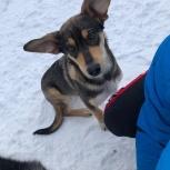 Найден щенок, Екатеринбург