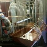 Клетка для птички, Екатеринбург