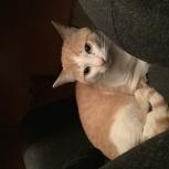 Найден кот (кошка), Екатеринбург