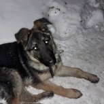 Пропал щенок, Екатеринбург