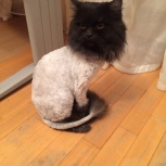 Стрижка кошек с выездом на дом или у меня, Екатеринбург