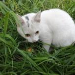 Найду новых хозяев котенку, Екатеринбург