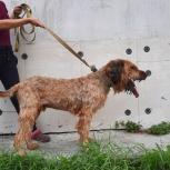 Найден пес, Екатеринбург