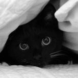 Молодой славный котик - в добрые руки, Екатеринбург