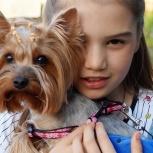 Пропала собака, Екатеринбург