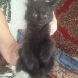 Котёнок-чертенок, Екатеринбург