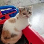в добрые руки котята, Екатеринбург