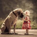 Маленькие дети и их большие собаки, Екатеринбург